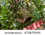 two palamedes swallowtail... | Shutterstock . vector #473870590