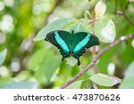 emerald swallowtail butterfly.  ... | Shutterstock . vector #473870626
