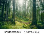 forest clearing in a green... | Shutterstock . vector #473963119