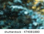 Weathered Spider Web In The...