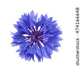 Dark Blue Cornflower Isolated...