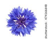Dark Blue Cornflower Isolated...