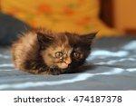Closeup Cute Tortie...