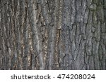 Texture Of Bark Of Old Pine Tree