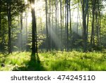 morning in the forest   Shutterstock . vector #474245110