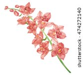 orchid watercolor. | Shutterstock . vector #474272140