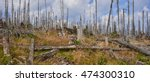 forest dieback by bark beetle... | Shutterstock . vector #474300310