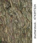 Bark Background 2