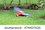 macaw in flight over field in... | Shutterstock . vector #474407620