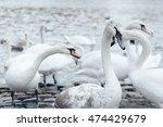 lot of white swans lurking... | Shutterstock . vector #474429679