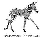 grevy zebra foal in trotting... | Shutterstock . vector #474458638