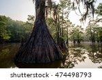 Cypress Trees On Saw Mill Pond...