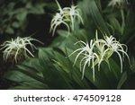 exotic plants in botanical... | Shutterstock . vector #474509128