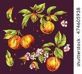beautiful hand drawn vector... | Shutterstock .eps vector #474605938