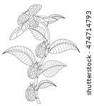 Hand Drawn Flower Coloring Page