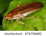 cockroaches everywhere in the... | Shutterstock . vector #474758680