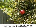 fresh red pomegranate fruit...   Shutterstock . vector #474768928