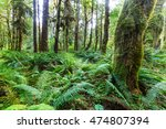forest in olympic national park ...   Shutterstock . vector #474807394