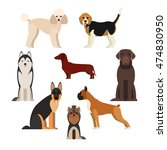 dogs breed set with beagle... | Shutterstock .eps vector #474830950