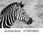 Black And White Side Profile O...