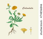 botanical illustration of the... | Shutterstock .eps vector #474856846