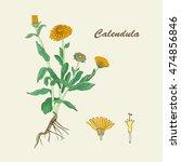 botanical illustration of the... | Shutterstock .eps vector #474856846