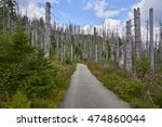 forest dieback by bark beetle... | Shutterstock . vector #474860044