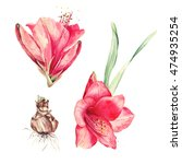 Watercolor Floral Elements Set...