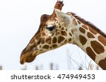 giraffe head.  profile of a... | Shutterstock . vector #474949453