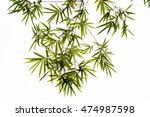 bamboo leaves | Shutterstock . vector #474987598