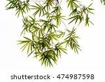 bamboo leaves | Shutterstock . vector #474987598