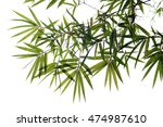 bamboo leaves | Shutterstock . vector #474987610