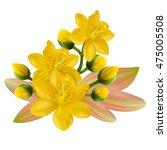 yellow apricot flower ... | Shutterstock .eps vector #475005508