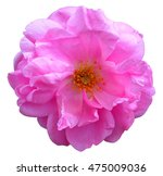 rose clip art | Shutterstock . vector #475009036