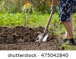 digging potatoes with shovel on ... | Shutterstock . vector #475042840