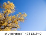 golden autumn in ejina  china | Shutterstock . vector #475131940
