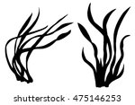 sea weeds black silhouettes ... | Shutterstock .eps vector #475146253