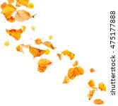 autumn leaves falling and... | Shutterstock . vector #475177888