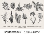 exotic flowers set. botanical... | Shutterstock .eps vector #475181890