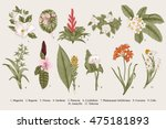 Stock vector exotic flowers set botanical vector vintage illustration design elements colorful 475181893