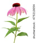 purple coneflowers isolated on... | Shutterstock . vector #475213054