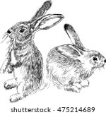 Stock vector rabbits black and white drawing 475214689