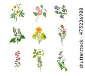 wild flowers hand drawn set of... | Shutterstock .eps vector #475236988