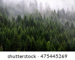 Coniferous Forest And Fog ...