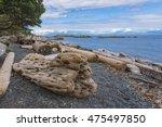 Driftwood On Beach On Nanaimo...