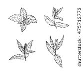sketch mint leaves set  vector... | Shutterstock .eps vector #475712773