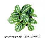 top view of small plant in... | Shutterstock . vector #475889980