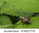 cricket | Shutterstock . vector #476027770