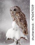 Winter Wildlife Scene With...