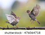 Two Young Playful Birds...